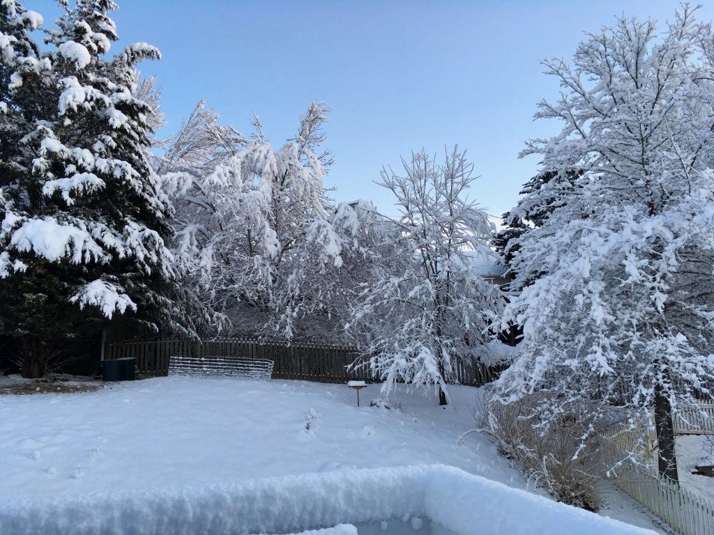 back garden in Mar 25 snow