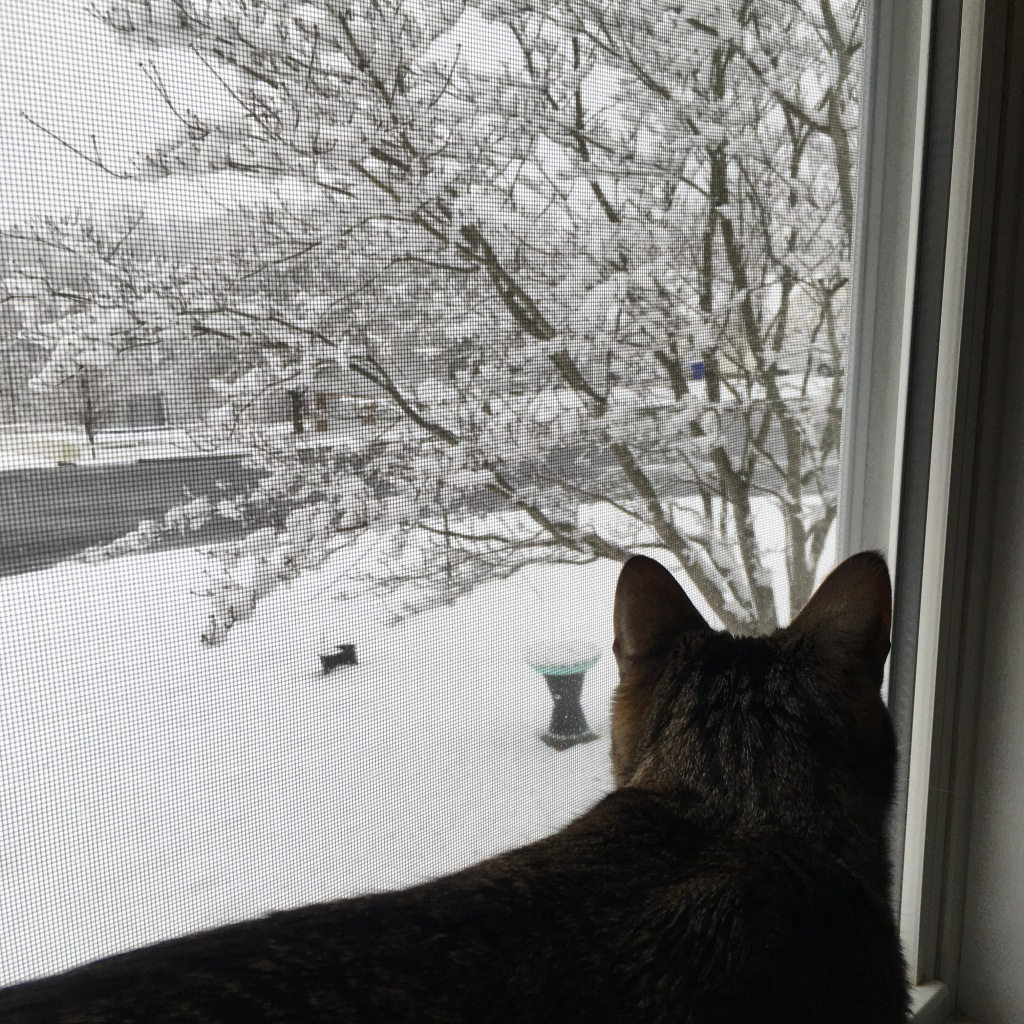 kitty in window watching snow