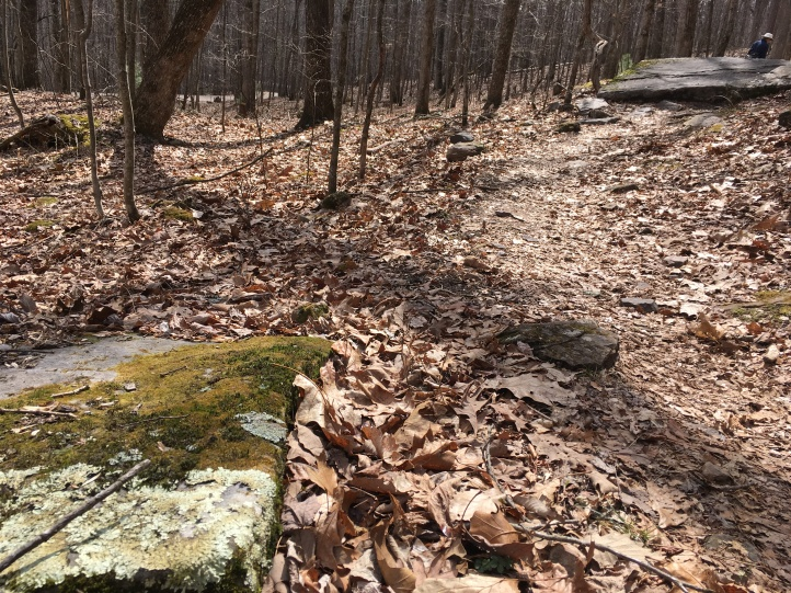 trail and mossy stone