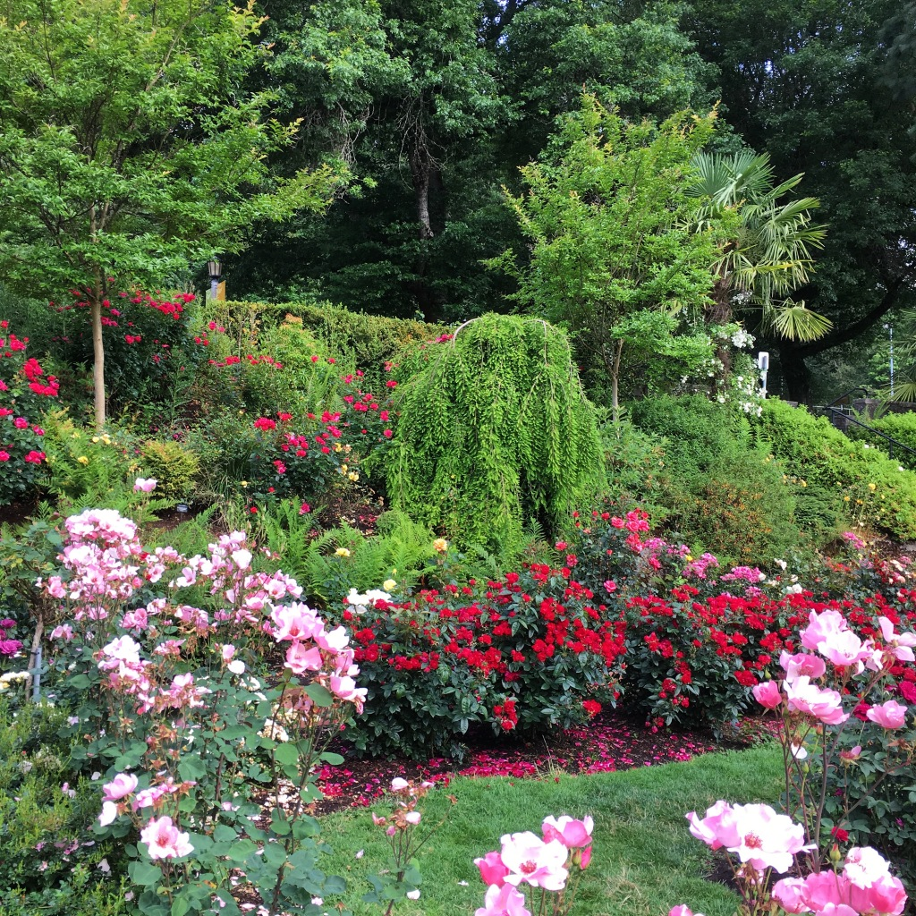 rose garden 4041