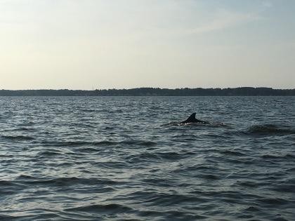 Dolphin :-)