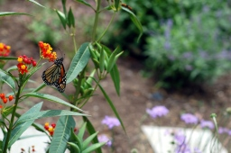 Photos from the butterfly garden