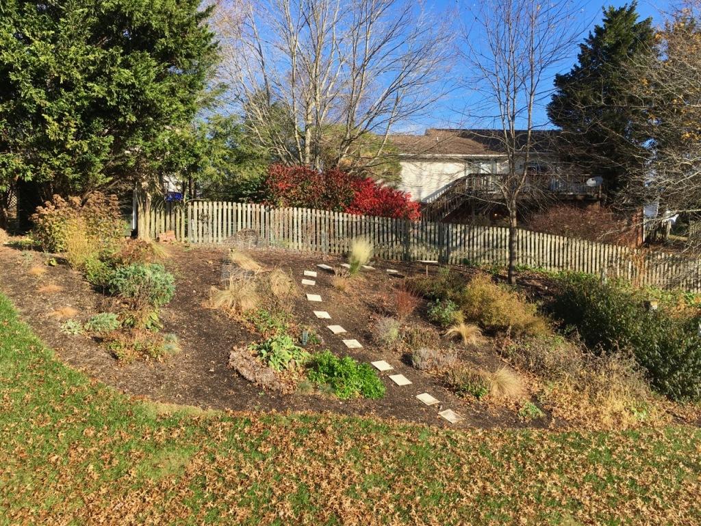 11 Nov back garden