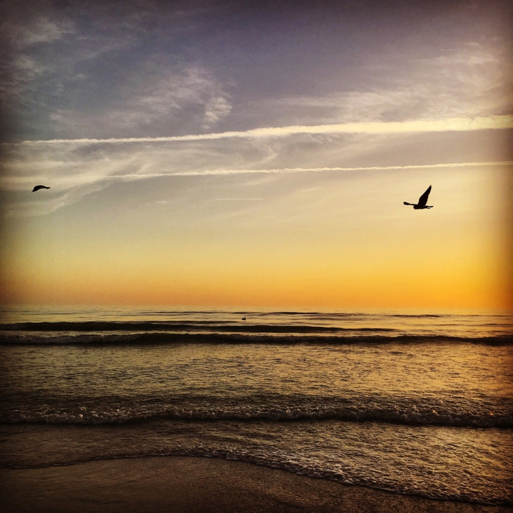 sunset with seagulls IG