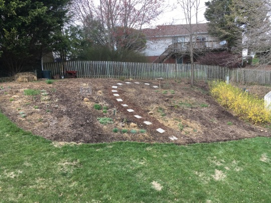 Before mulch: back hill