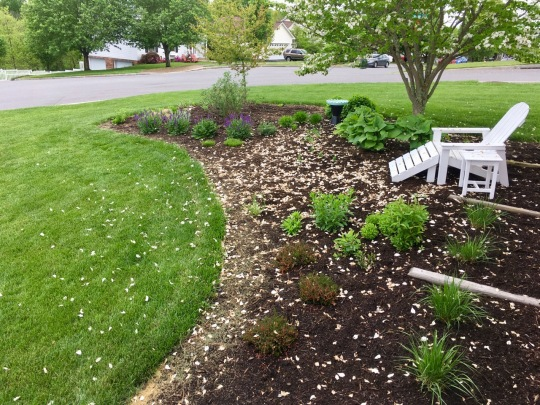 May 5: front bed