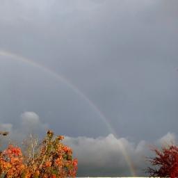 Grocery pickup rainbow