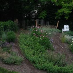 Butterfly garden in early July